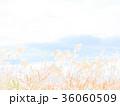 すすき 11月 36060509