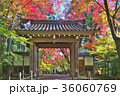 秋 紅葉 寺院の写真 36060769