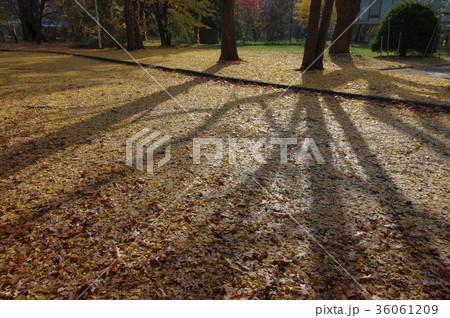 秋の日差しに伸びる影 36061209