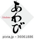 あわび Abalone 貝のイラスト 36061886