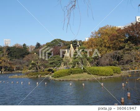 千葉公園綿打池の冬の風物詩雪吊り 36061947