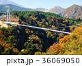 九重夢大吊橋 紅葉 秋の写真 36069050