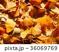 あき 秋 背景の写真 36069769