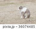 ウサギ 36074485