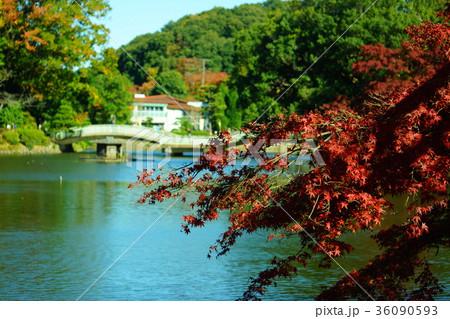11月の薬師池公園の紅葉 36090593