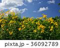花 青空 雲の写真 36092789