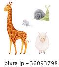 きりん キリン かたつむりのイラスト 36093798