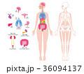 内臓 人体 全身のイラスト 36094137