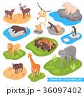 動物園 動物 組み合わせのイラスト 36097402