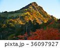 朝陽に映える瓶ヶ森(愛媛県西条市) 36097927