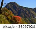 紅葉の西黒森(愛媛県高知県境) 36097928