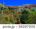 紅葉の伊予富士(愛媛県高知県境)(ヨコ) 36097930