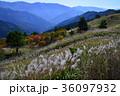 落合峠秋景色(徳島県東祖谷山村)(ヨコ) 36097932