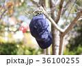 木の枝にぶら下がった帽子 36100255
