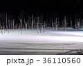 青い池 ライトアップ 美瑛の写真 36110560