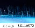 青い池 ライトアップ 美瑛の写真 36110572