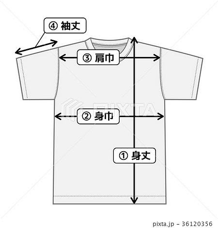 半袖Tシャツ 寸法表・サイズ表用イメージイラスト 36120356