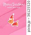 クリスマス メリー・クリスマス ちわわのイラスト 36125520