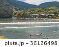 京都 嵐山 秋の写真 36126498