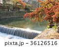 京都 嵐山 桂川の写真 36126516