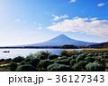 河口湖 富士山 大石公園の写真 36127343