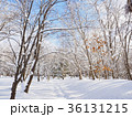 雪の積もった林の道 36131215