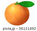 温州みかん 蜜柑 果物のイラスト 36131892