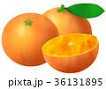 温州みかん 蜜柑 カットみかんのイラスト 36131895