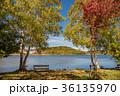 紅葉 白樺湖 湖畔の写真 36135970