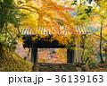 紅葉 秋月 秋の写真 36139163
