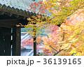 紅葉 秋月 秋の写真 36139165