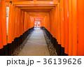 京都 伏見稲荷 鳥居の写真 36139626