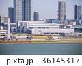 豊洲市場 水産棟 36145317