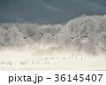 タンチョウ 樹氷 飛翔の写真 36145407