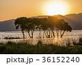 夕陽 琵琶湖 木々の写真 36152240