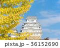 姫路城 秋 黄葉の写真 36152690