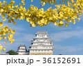 姫路城 秋 黄葉の写真 36152691