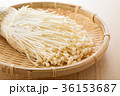 エノキ 36153687
