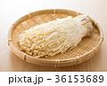 エノキ 36153689