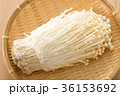エノキ 36153692