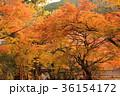 談山神社 紅葉 秋の写真 36154172