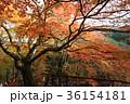 談山神社 紅葉 秋の写真 36154181