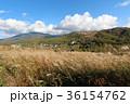 白樺湖 秋 蓼科高原の写真 36154762