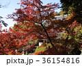 長岳寺 紅葉 本堂の写真 36154816