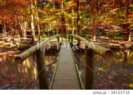 川と紅葉の木々 36155716