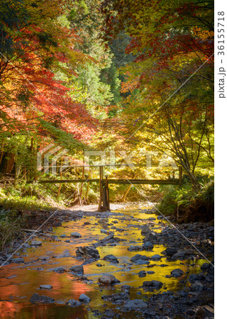 川と紅葉の木々 36155718