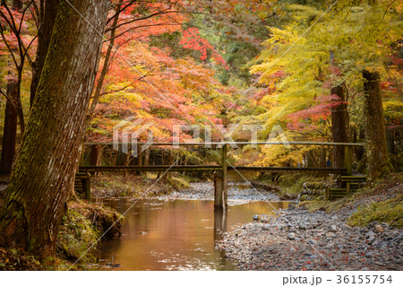 川と紅葉の木々 36155754