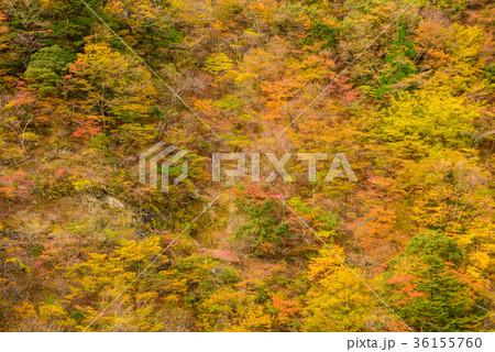 渓谷の風景、晩秋の山。 36155760