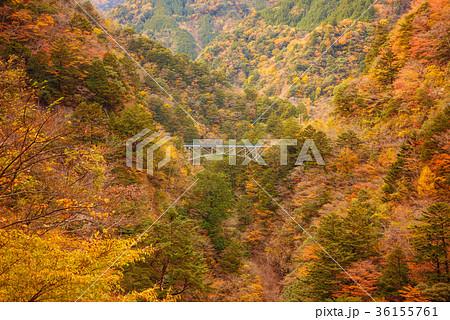 渓谷の風景、谷を渡る橋、寸又峡。 36155761