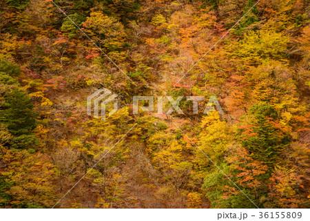 渓谷の風景、晩秋の山。 36155809